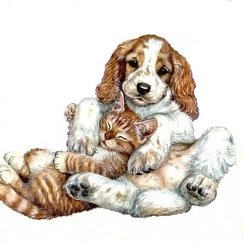 tubes chien